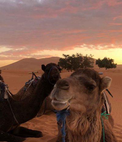 Desert trip MHamid